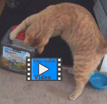 funny cat video of cat playing fetch